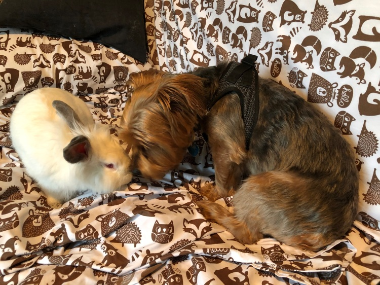 dog and rabbit become friends