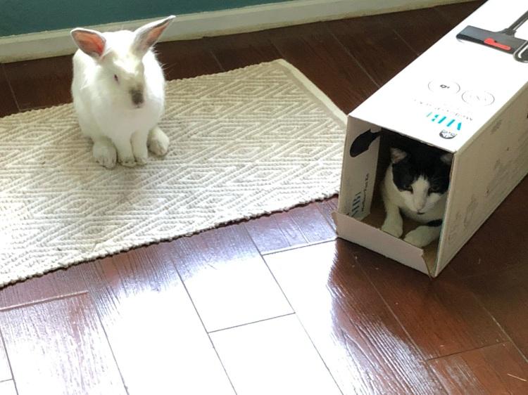 cat monopolizes hide out